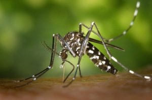 Let Flying Pig Pest Control Protect Your Home for Mosquitos